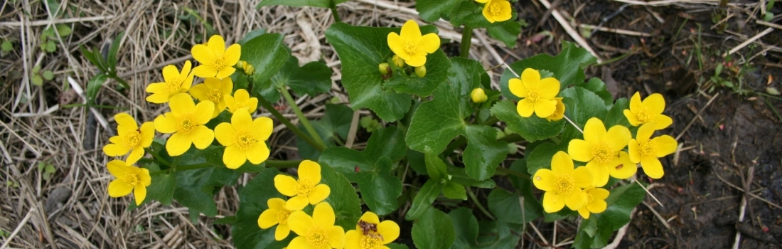 Le printemps est arrivé à la Réserve naturelle du Marais-Léon-Provancher