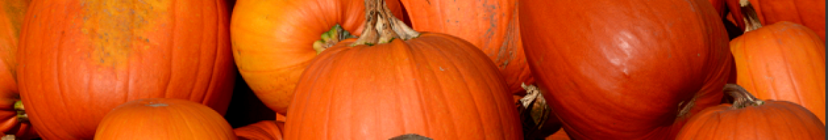 Les chauves-souris et l'Halloween!