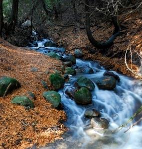 Faites un don à la nature (Photo: yvanbedardphotonature.com)