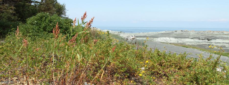 Un système prometteur pour la réservation des chalets à l'île aux Basques