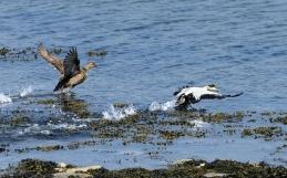 Bilan de 100 ans de protection de nos oiseaux marins