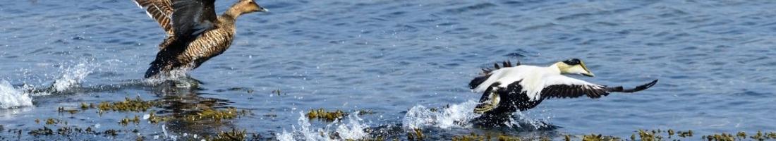 Conférence de Jean-François Rail le 20 avril 2017 «Bilan de 100 ans de protection de nos oiseaux marins»