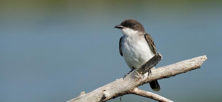 Invitation aux ornithologues du Québec