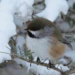 Recensement des oiseaux de Noël 2019 – Inscription avant le 7 décembre