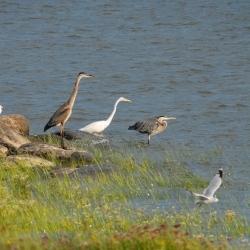 Ornithologie printanière à la Réserve naturelle du Marais-Léon-Provancher