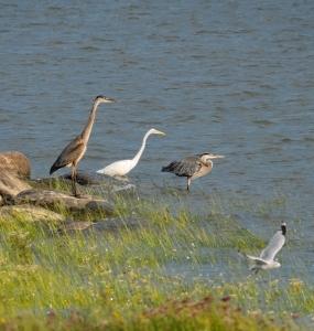 Observation d'oiseaux (Photo: yvanbedardphotonature.com)