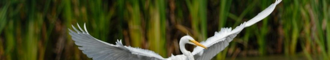 Naissance et maturation d'un territoire protégé,  la Réserve naturelle du Marais-Léon-Provancher