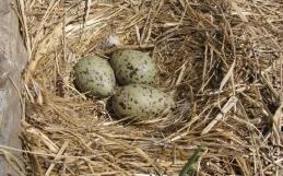 Inventaire des oiseaux marins aux îles Razade en 2020