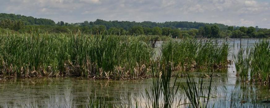Reconstruction de l'exutoire du marais de la Réserve naturelle du Marais-Léon-Provancher