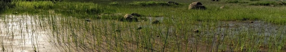 L'arrivée de l'été à la Réserve naturelle du Marais-Léon-Provancher