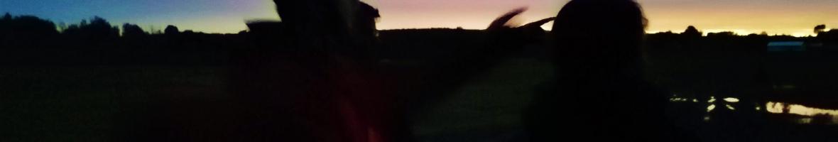 UN GRAND PAS POUR LES CHAUVES-SOURIS DE LA RÉGION DE PORTNEUF ET DE SAINT-AUGUSTIN-DE-DESMAURES