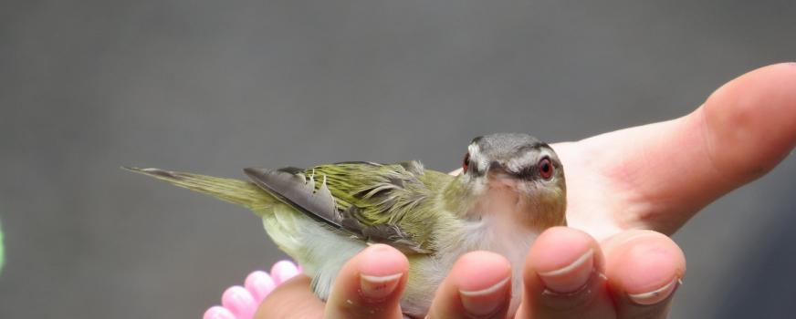 Confirmation du baguage des oiseaux du samedi 2 juin 2018